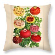 Calceolaria From A Vintage Belgian Book Of Flora. Throw Pillow by Unknown