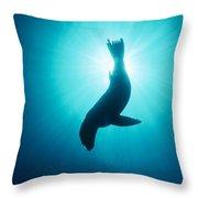 California Sea Lion  Channel Islands Np Throw Pillow by Flip Nicklin