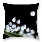Campanella On Algae Throw Pillow by Tom Branch