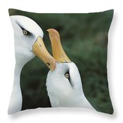 Campbell Albatrosses Courting Campbell Throw Pillow by Tui De Roy
