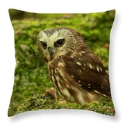 Canada's Smallest Owl - Saw Whet Owl Throw Pillow by Inspired Nature Photography Fine Art Photography