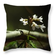 Cardamine Concatenata Cutleaf Toothwort Throw Pillow by Rebecca Sherman