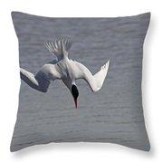 Caspian Tern Dive Throw Pillow by Jim Nelson