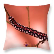 Caterpillar Throw Pillow by Jeff Swan