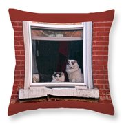 Cats On A Sill Throw Pillow by Randi Shenkman