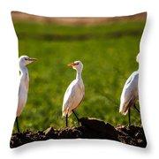 Cattle Egrets Throw Pillow by Robert Bales
