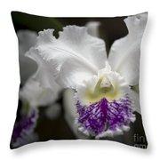 Cattleya Catherine Patterson Full Bloom Throw Pillow by Terri Winkler