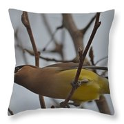 Cedar Waxwing Feasting In Foggy Cherry Tree Throw Pillow by Jeff at JSJ Photography