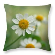 Chamomile Throw Pillow by Kathy Yates
