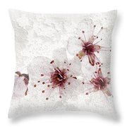 Cherry Blossoms Close Up Throw Pillow by Elena Elisseeva