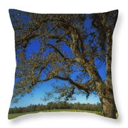 Chickamauga Battlefield Throw Pillow by Mountain Dreams