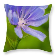Chicory With Morning Dew Throw Pillow by Anthony Heflin