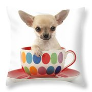 Chihuahua In Cup Dp684 Throw Pillow by Greg Cuddiford