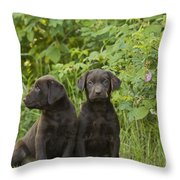 Chocolate Labrador Retriever Puppies Throw Pillow by Linda Freshwaters Arndt