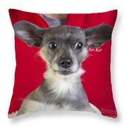 Christmas Dog Throw Pillow by Edward Fielding