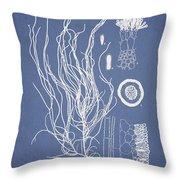Cladosiphon flagelliformis Throw Pillow by Aged Pixel