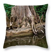 Clinging Cypress Throw Pillow by Christopher Holmes