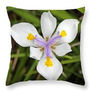 Close Up Of An Iris Throw Pillow by Anonymous