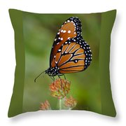 Close-up Pose Throw Pillow by Penny Lisowski