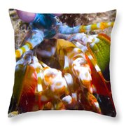 Close-up View Of A Mantis Shrimp Throw Pillow by Steve Jones