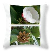 Clusia rosea - Clusia major - Autograph Tree - Maui Hawaii Throw Pillow by Sharon Mau