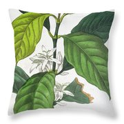 Coffea Arabica Throw Pillow by Pancrace Bessa