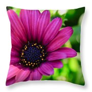 Color Madness Throw Pillow by Charles Dobbs