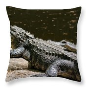 Comfy Cozy Throw Pillow by Lois Bryan