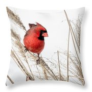 Common Northern Cardinal Square Throw Pillow by Bill Wakeley