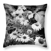 ConeFlowers Echinacea Rudbeckia BW Throw Pillow by Rich Franco