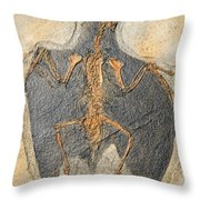 Confuciusornis Fossil Throw Pillow by Millard H Sharp