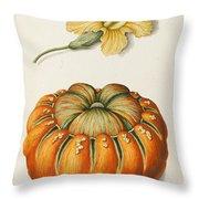 Courgette And A Pumpkin Throw Pillow by Joseph Jacob Plenck