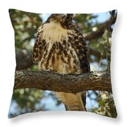 Curious Redtail Throw Pillow by Donna Blackhall