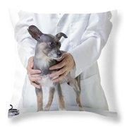Cute Little Dog At The Vet Throw Pillow by Edward Fielding