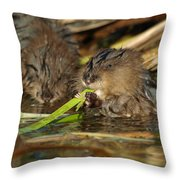 Cutest Water Rats Throw Pillow by James Peterson