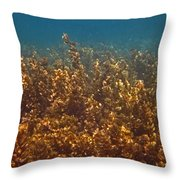 Cyril Throw Pillow by Pete Marchetto