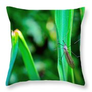 Daddy Long Legs  Throw Pillow by Toppart Sweden