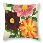 Dahlia Coccinea from a Begian book of flora. Throw Pillow by Philip Ralley