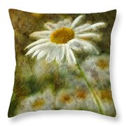 Daisies ... Again - P11at01 Throw Pillow by Variance Collections