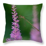Damselfly Throw Pillow by Juergen Roth