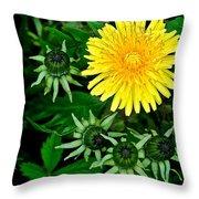 Dandelion Farm Throw Pillow by Frozen in Time Fine Art Photography