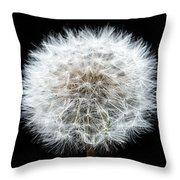 Dandelion Life Cycle Throw Pillow by Steve Gadomski