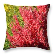 Days Like This Throw Pillow by Kathy Bassett