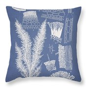 Delesseria Middendorfii and Chardaria abientina Throw Pillow by Aged Pixel