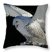 Destiny's Journey - Snowy Owl Throw Pillow by Inspired Nature Photography Fine Art Photography