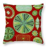 Diatoms-ernst Haeckel Throw Pillow by Scott Camazine