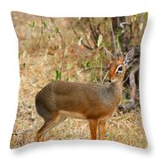 Dik Dik Tsavo National Park Kenya Throw Pillow by Amanda Stadther