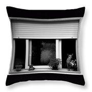 Dog In A Window Throw Pillow by Fabrizio Troiani