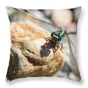 Dragonfly Throw Pillow by Marco Oliveira