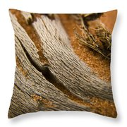 Driftwood 2 Throw Pillow by Adam Romanowicz